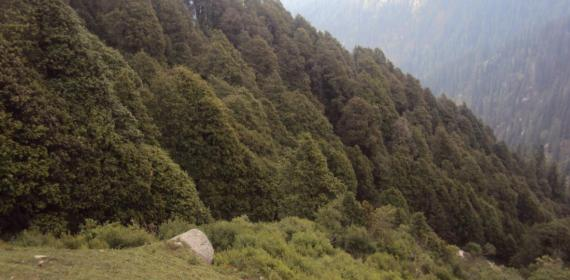 Very Thick forests of Shikari Devi National Park vally